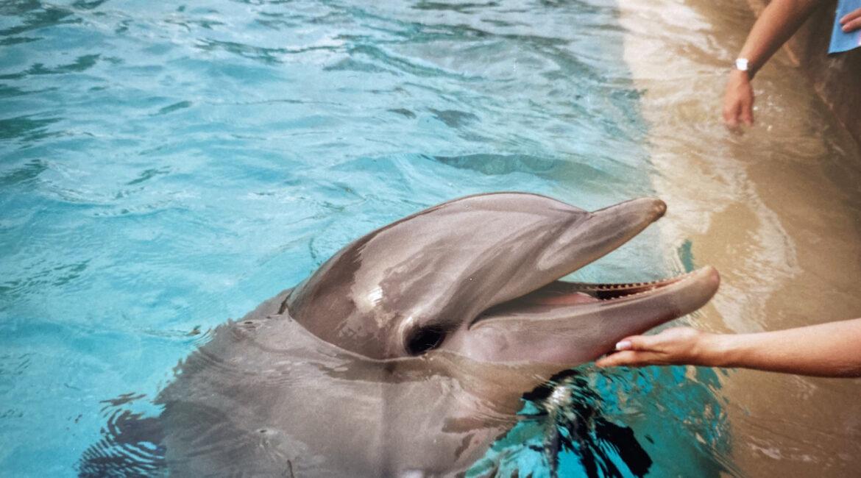 Beratung in stürmischen Zeiten. Was wir von Delfinen lernen können.